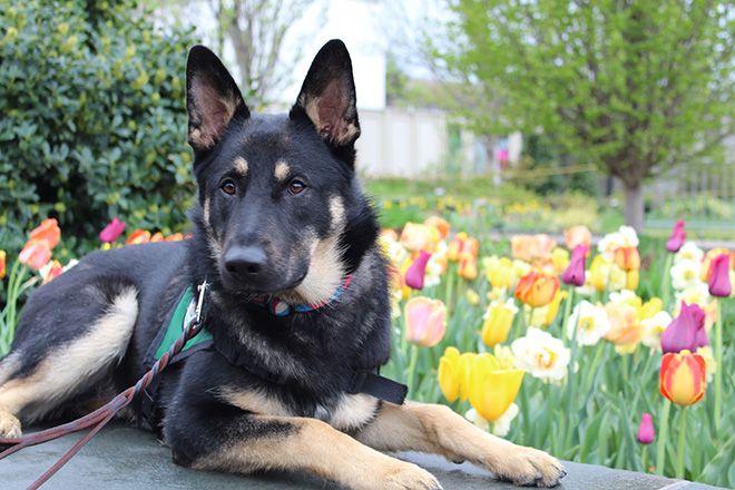 Image result for black dog with tulips